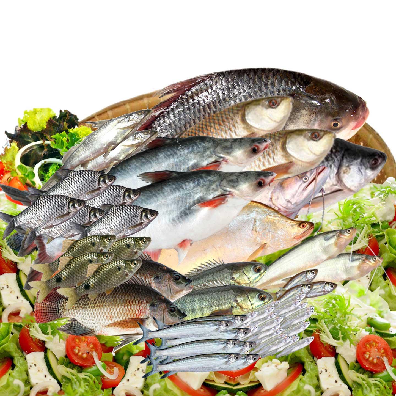 virgo fish
